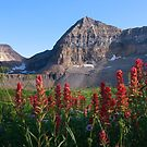 Timpanogos Paintbrush by David Kocherhans
