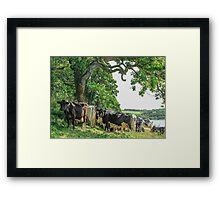 Cows Under Tree Framed Print
