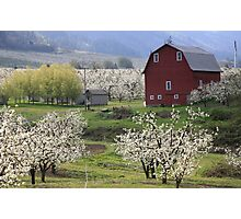 Blossoms For Miles Photographic Print