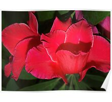 Velvety red lilies Poster