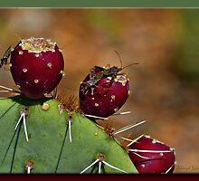 Prickly Pears..... by Sheryl Gerhard