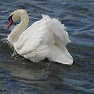 Swan,  powerful bird by loiteke