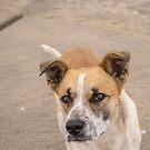 9414 street dog by pcfyi