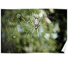 Large tropical spider in the web Poster