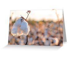 Cotton Field 14 Greeting Card