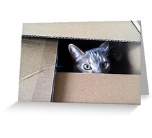 Cat in the Box Greeting Card