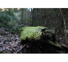 moss log. Photographic Print
