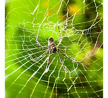 Large tropical spider in the web Photographic Print