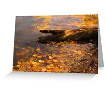Fallen log in fall pond Greeting Card
