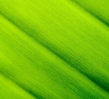 Macro shot of green leaf texture, nature background by Stanciuc
