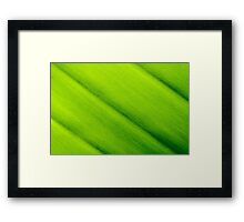 Macro shot of green leaf texture, nature background Framed Print