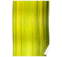 Macro shot of green bamboo texture, nature backgroud Poster