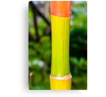 Macro shot of green bamboo texture, nature backgroud Canvas Print