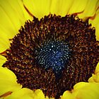 Center Of A Sunflower by Cynthia48