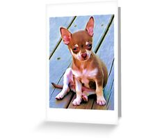 Coco,.....So Serious ! Greeting Card