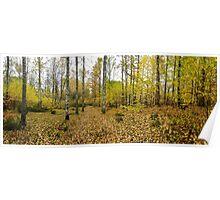 Fall comes in at Dalsland's Sörknatten Naturreservat Poster