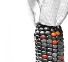 Heirloom Corn Sticker