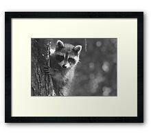 Peek-a-boo! /Baby Raccoon in black and white Framed Print