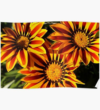 bright red and yellow daisy Poster