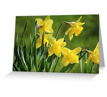 Daffodil Dreams Greeting Card