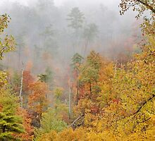 foggy fall by dc witmer
