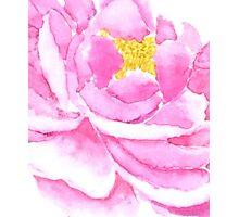 pink peony macro watercolor  Photographic Print