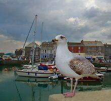 Padstow, Cornwall, UK, The Seagull ~ Atlantic Coast by Debra  Jayne