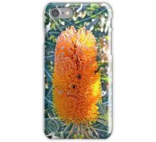 Orange Australian Banksia flower  iPhone Case/Skin