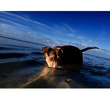 Paws playing Jaws Photographic Print