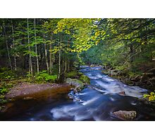 Whitewater Stream in Lush Forest Photographic Print