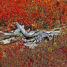 Driftwood by Eileen McVey