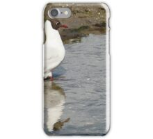 Black Headed Gull and Reflection iPhone Case/Skin