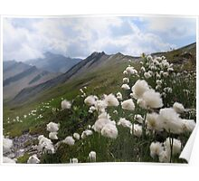 Beautiful nature mountains flowers Poster