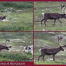 Following A Reindeer by ArtOfE
