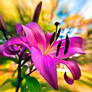 Oriental Lilly in the sunshine by Jaxybelle