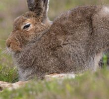 Mountain Hare Sticker