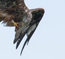 Red Kite Sticker
