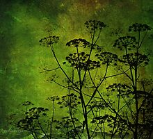 seedheads by Doria