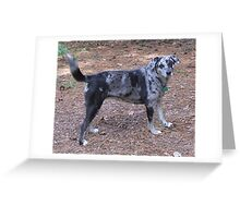CLD full blue merle Greeting Card