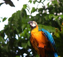 The Blue-and-Yellow Macaw by Photoscaping