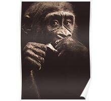 Lowland Gorilla Toddler Poster