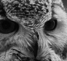 Bengal Eagle Owl Sticker
