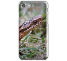 Juvenile Adder iPhone Case/Skin