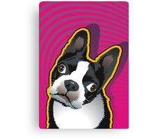 quizzical Bailey Canvas Print