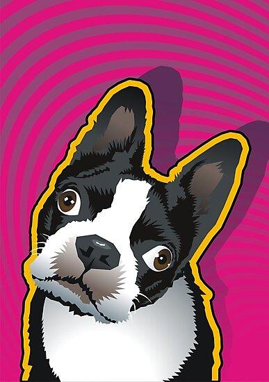 quizzical Bailey by Matt Mawson