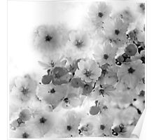 CHERRY BLOSSOMS IN BLACK AND WHITE Poster