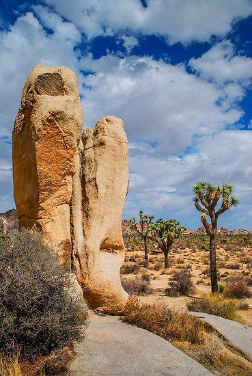Desert by Radek Hofman