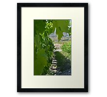 Italian Vineyard Framed Print