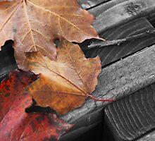 Leaf Bench by Mikayla Perecich