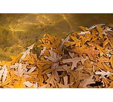 Floating Chaos - Fallen Oak Leaves in the Fountain Photographic Print
